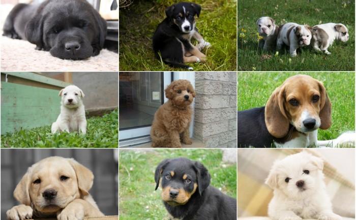 Vi vet vilken hundvalp som kommer att göra dig glad – baserat på ditt stjärntecken