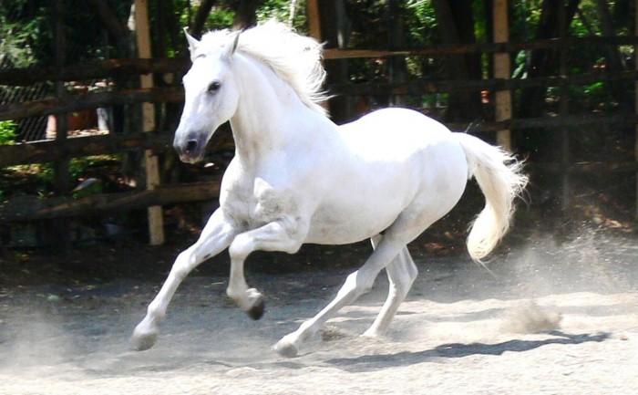 Vad kan du om hästar?