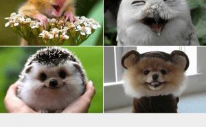 Vad är du för djur