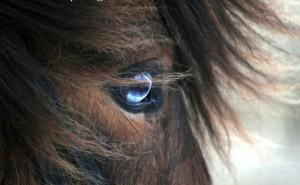 Hur bra är du på hästraser?