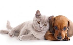 Personlighet: Katt eller Hund