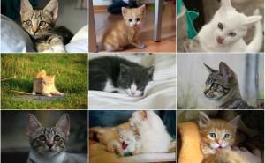 Vi vet vilken kattunge som kommer att göra dig glad – baserat på ditt stjärntecken