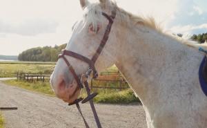 Hur mycket kan du om hästar och ridsport?