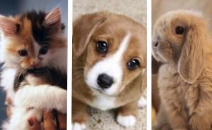 Testa! Vilket djur borde du skaffa?