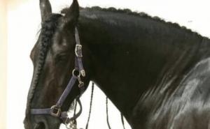 Vilken häst ras är du?