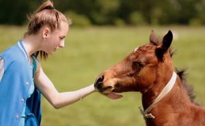 Testa dig! Hur mycket hästmänniska är du?