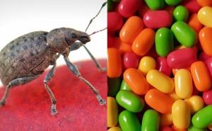Är det godis eller en insekt? Testa och se efter här!