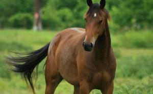 Vilken hästras är du?