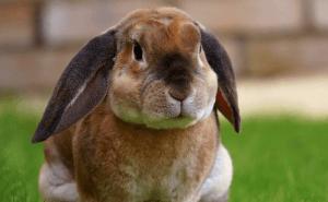 Hur mycket kan du om kaninhoppning?