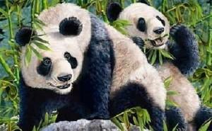 Hur många gömda Pandor kan du hitta? (Nej, det är inte två)