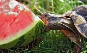 Test: Borde du äta mer vattenmelon i ditt liv?