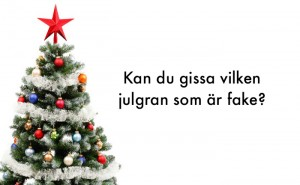 Kan du gissa vilken julgran som är fake?