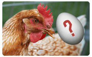 Ägget eller hönan?