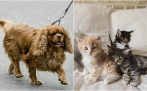 Kan vi gissa vad ditt husdjur heter med fyra enkla frågor?