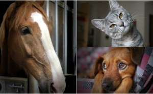 Svara på dessa frågor så säger vi vad för husdjur du borde skaffa