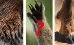 Quiz: Kan du gissa djuret bara genom att se tassen?