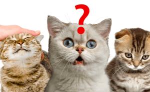 Är din katt lycklig? Testa här!