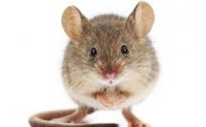 Vem vet mus