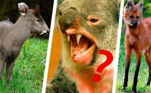 Quiz: Finns det konstiga djuret på riktigt?
