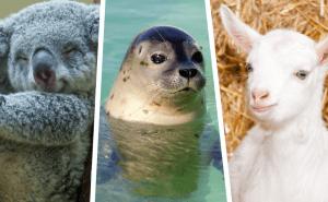 Hur bra koll har du på de här gulliga djuren? Testa här