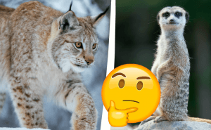 Det här djurquizzet blir svårare för varje fråga –hur många rätt får du?