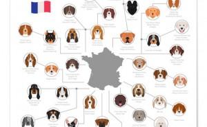 Vilken hundras är du? Testa här!