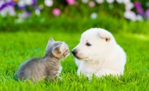 Är du hund eller katt männniska? Spela detta kwiss och ta reda på det!