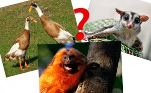 Quiz: Får man ha det konstiga djuret som husdjur?