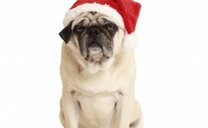 Vad kan du om julmusikplågan?