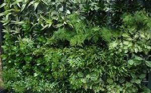 Vad kan du om växter?