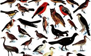 Svenska fåglar