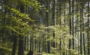 Vilket skogsdjur är du?
